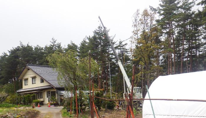 高所作業 伐採の様子